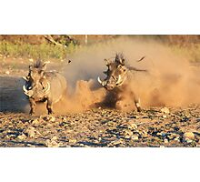 Warthog - Dust, Tusks and Hormones Photographic Print