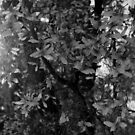 Butterfly tree in B&W by debsdesigns