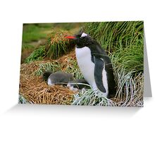 Gentoo Penguins on the Nest Greeting Card