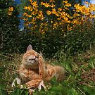 Ginger cat and yellow flowers by turniptowers