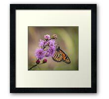 Foggy Morning Monarch Framed Print