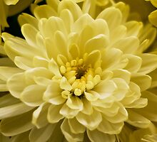 Bright Yellow by alistairbeavis