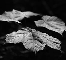 Summer Leaves by Tony Wilder