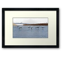 Canadian Geese Takeoff Framed Print
