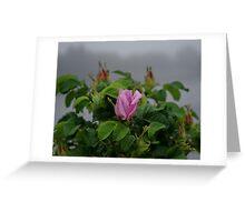 Rose at Dawn Greeting Card