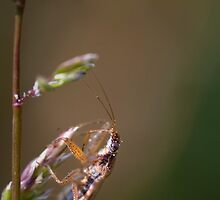 bug on greenery by rhizin