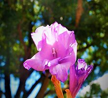 Purple bloom against the canopy by ♥⊱ B. Randi Bailey