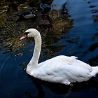 Swan by Eric Christopher Jackson