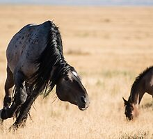 A Snaking Stallion by Kelly Jay