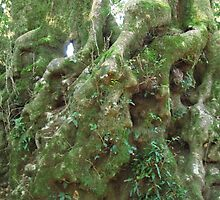 Lichen growing on butt of ancient Antartic Beach, Purling Brook Falls Track. Springbrook. Qld. by Rita Blom