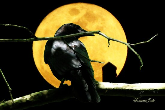 Black Crow Harvest Moon by SummerJade