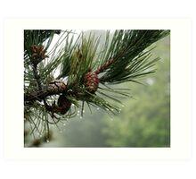 Pine Cones and Dew Art Print