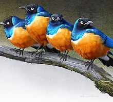 meet the snarkers- the original angry birds by R Christopher  Vest