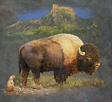 brief altercation - bison and prairie dog by R Christopher  Vest