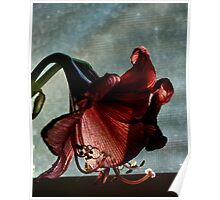 Faded Amaryllis Poster