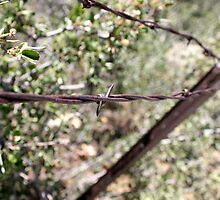 Rusted barbed wire & fence by trepj