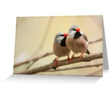 Long-tailed finch Greeting Card
