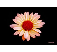 Painted the Color of Sunrise~ Daisy Photographic Print