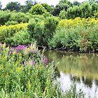 Wetlands in Summer by Monnie Ryan