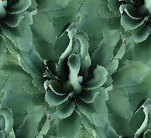 Agave Repeat Play by Judi FitzPatrick