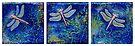 Three Dragonflies by Jacqueline Eden