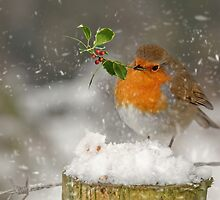 Christmas Robin by Lyn Evans