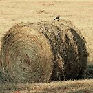 Bale Of Hay by RickDavis