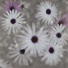 Dots and Daisies by Sue  Fellows