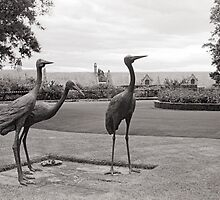 Tasmanian Emus—Government House, Hobart Tasmania by Brett Rogers
