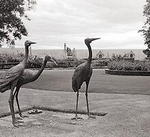 Tasmanian Emus—Government House, Hobart Tasmania by Brett Rogers