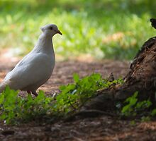 pigeons in the park by spetenfia
