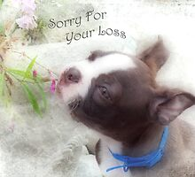 Sorry For Your Loss ~ Boston Terrier Greeting Card by Susan Werby