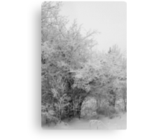 Frost Coated Trees Metal Print