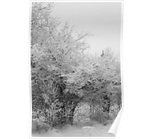 Frost Coated Trees Poster