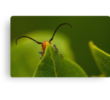 red insect playing hide and seek Canvas Print