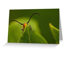 red insect playing hide and seek Greeting Card