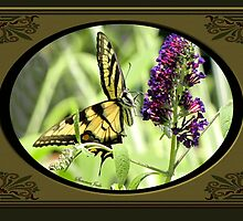 Swallowtail Butterfly Having Lunch by SummerJade