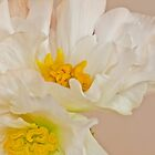 White Begonia Ruffles  by Sandra Foster