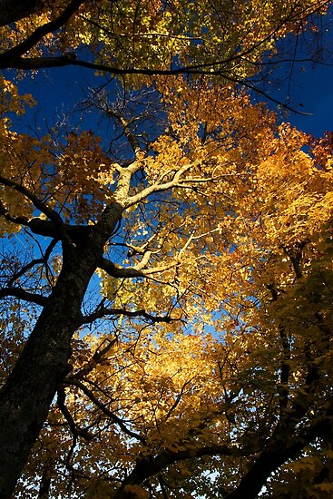 Bright Gold - Chattanooga, Tennessee by Alex Zuccarelli