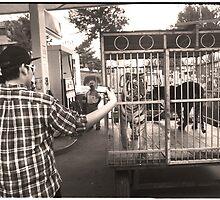 Gas Station Tigers - Quetzaltenango (Xela), Guatemala by Alex Zuccarelli