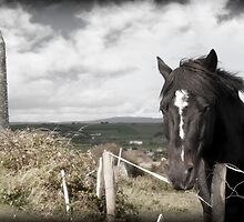 black Irish horse and ancient round tower by morrbyte