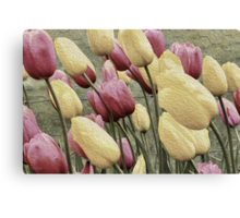 Effectively Tulips Canvas Print