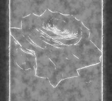 Pink Roses in Anzures 3 Outlined Gray by Christopher Johnson