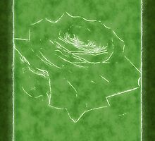 Pink Roses in Anzures 3 Outlined Green by Christopher Johnson
