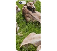 cows in the meadow iPhone Case/Skin