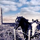 pair of wild Irish horses and ancient round tower by morrbyte