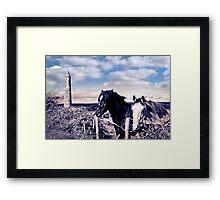 pair of wild Irish horses and ancient round tower Framed Print