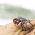 Sally Lightfoot Crab by Paul Wolf