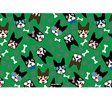 Boston Terrier Funny Faces Green Photographic Print