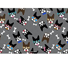 Boston Terrier Funny Faces Grey Photographic Print